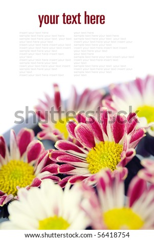 bowl of water and flowers over white with copyspace (with sample text) - stock photo