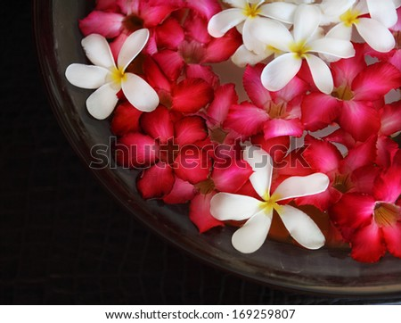 Bowl of water with pink and white flowers. Close up. Spa concept - stock photo