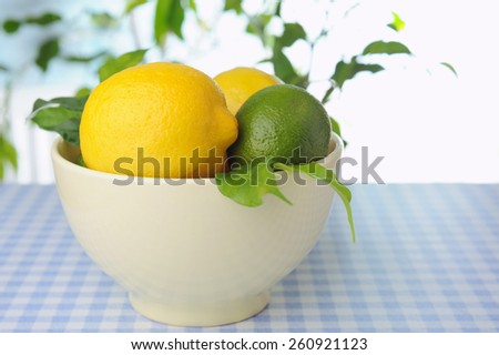 Bowl with fresh lemons on the table and green plants on background - stock photo