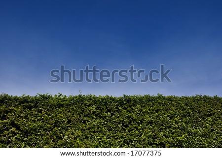Box Hedgerow - stock photo