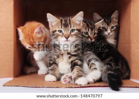 Box of kittens - stock photo