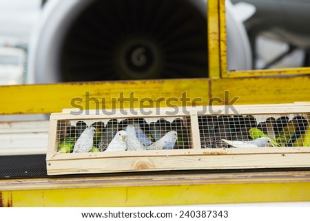 Box with parrot is loading to the airplane. - stock photo