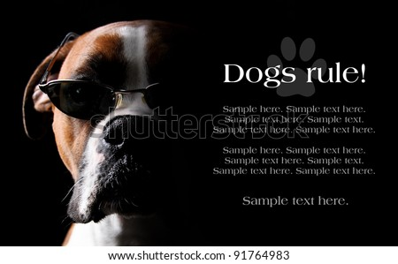 Boxer Dog wearing Sunglasses with text space to the right - stock photo