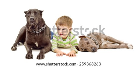 Boy and two dogs of breed pit bull lying down together isolated on white background - stock photo