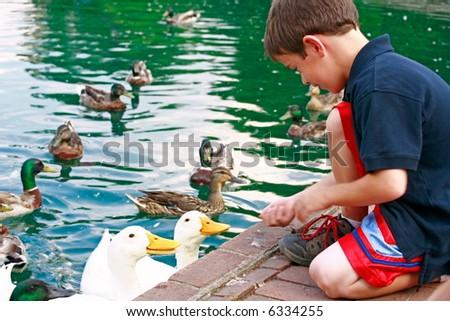 Boy Feeding Ducks - stock photo