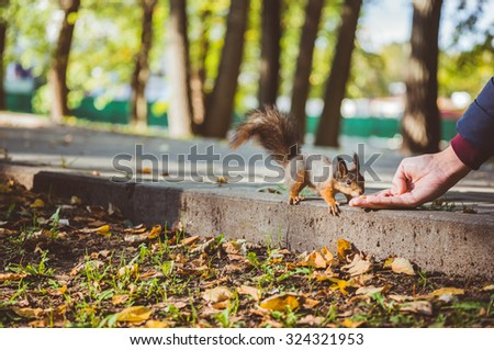 boy feeds a squirrel in the park - stock photo
