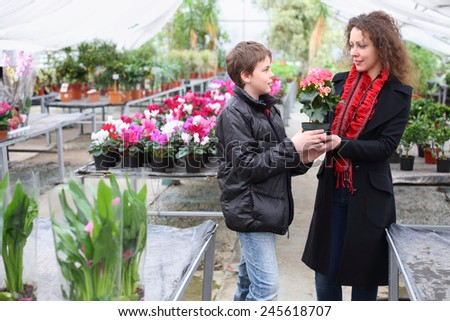 Boy gives mother a flower pot with blooming begonia in the greenhouse - stock photo