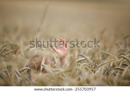 Boy hiding in wheat field waving his hand - stock photo