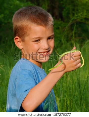 Boy holding a green tree dwelling snake, Rough Green Snake, Opheodrys aestivus - stock photo