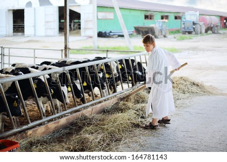 Boy in white robe works by hayfork near stall with calves in farm. - stock photo