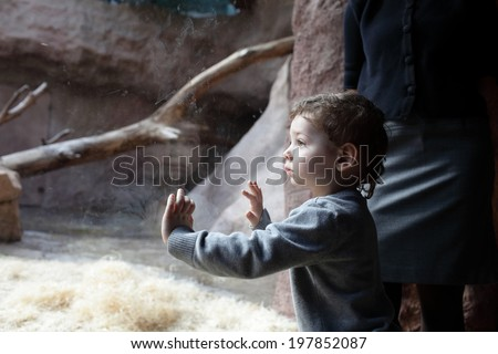 Boy looking at terrarium in the zoo - stock photo