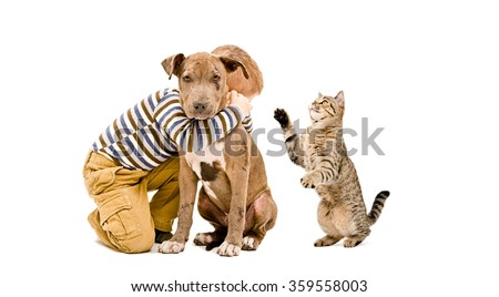 Boy, pit bull puppy and cat playing together, isolated on white background - stock photo