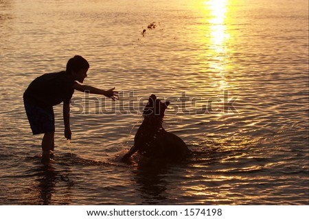 Boy playing with the dog - stock photo