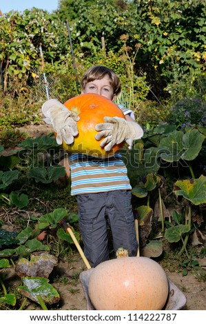 boy standing with big yellow pumpkin in hands - stock photo