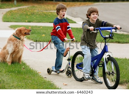 Boys Playing with the Dog - stock photo