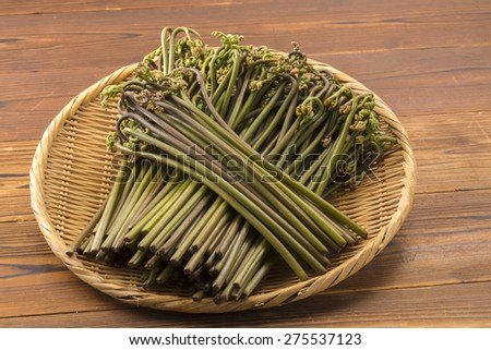 Bracken - stock photo