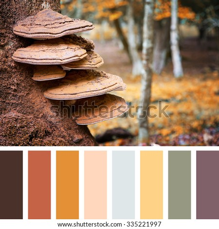 Bracket fungus growing on the stump of a beech tree, autumn tones, in the New Forest, Hampshire, UK. In a colour palette with complimentary colour swatches. - stock photo