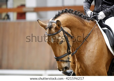 Braided mane for dressage sport horse during a dressage training indoors - stock photo