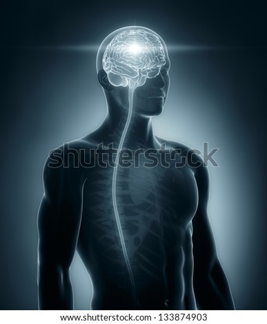 Brain and spinal cord medical x-ray scan - stock photo