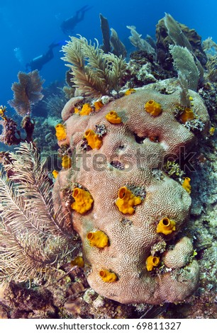 Brain coral with yellow boring sponge - stock photo