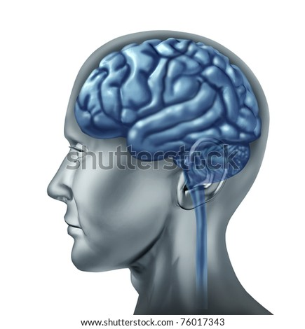 Brain lobes symbol represented by a human head showing the mind and the divisions of the thinking organ. - stock photo