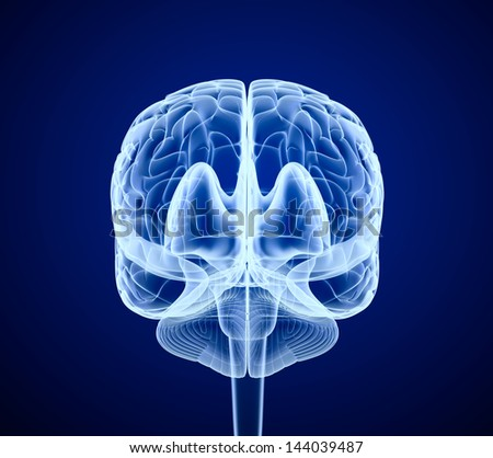 Brain scan, X-ray , front view - stock photo