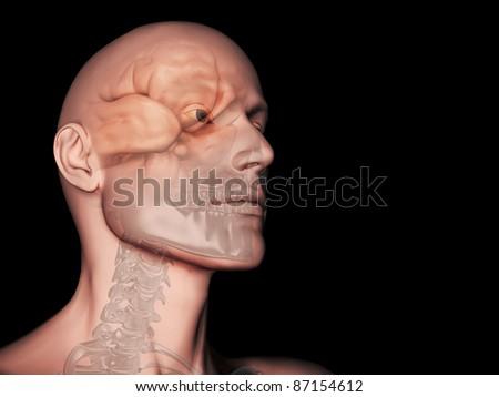 Brain Visible through Transparent Head - stock photo