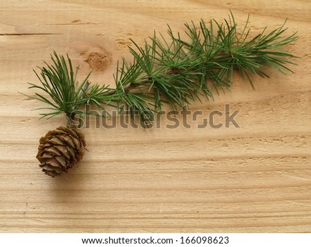 branch and cone from a european larch - stock photo