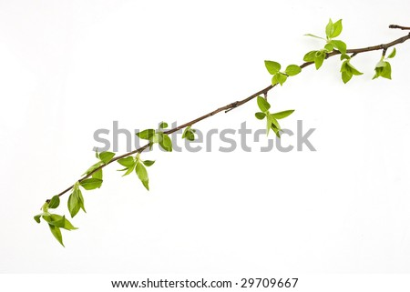 Branch apple tree with spring buds isolated on white - stock photo