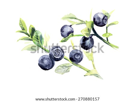 Branch bilberry. Forest miniatures. Watercolor hand drawn illustration - stock photo