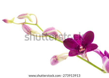 Branch blooming purple orchid is isolated on white background - stock photo