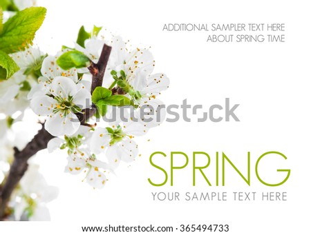 Branch blooming tree with green leaves spring still life. Isolated on white background - stock photo