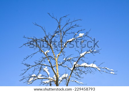 branch covered by heavy snow  - stock photo