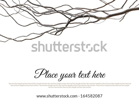 Branch covered with snow isolated on white background - stock photo
