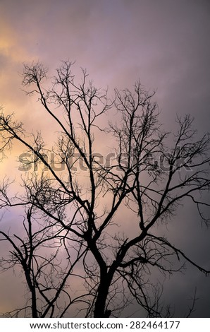 branch of a tree against the evening sky - stock photo