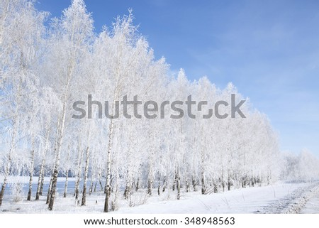 branch of a tree in the snow against the blue sky. Frosty winter day - snowy branch. - stock photo