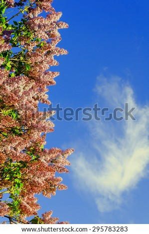 Branch of blooming lilacs on the background of blue sky with copyspace (tonal processing) - stock photo