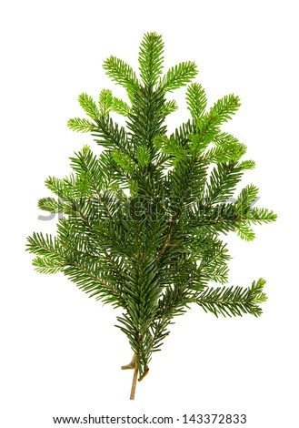 branch of christmas tree isolated on white background. pine twigs. fresh green fir branches - stock photo