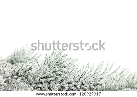 branch of Christmas tree with snow - stock photo