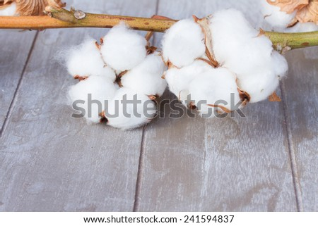 Branch of  cotton plant bud on wooden background - stock photo
