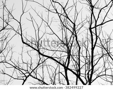 Branch of dead tree - stock photo