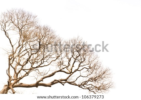Branch of dead tree on white background - stock photo