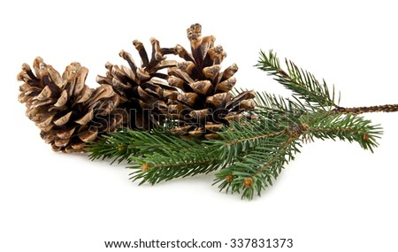 branch of fir-tree and cone on a white background - stock photo