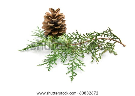 branch of fir-tree  with a cone on a white background - stock photo