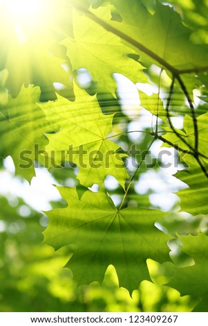 Branch of fresh green maple and sunlight with water ripples - stock photo