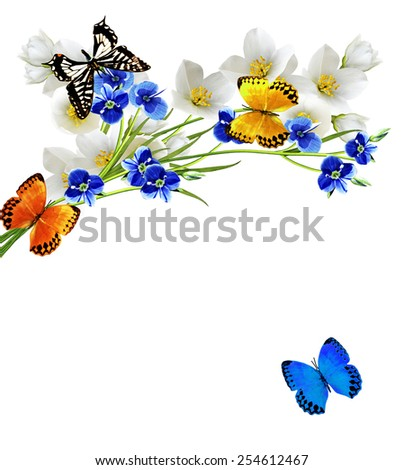 branch of jasmine flowers and butterflies - stock photo