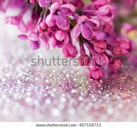 branch of lilac flowers on a silver background with drops of water. shallow depth of field. square photo - stock photo