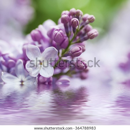 Branch of lilac flowers with the leaves,  vintage retro hipster image with  water reflection, seasonal spring holiday background - stock photo