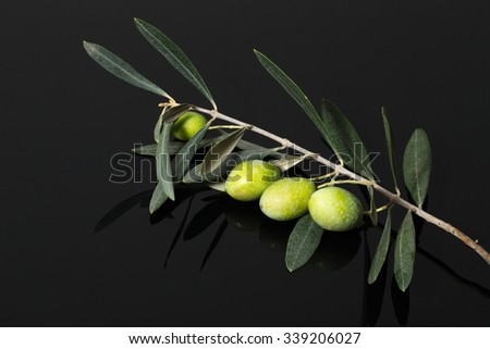Branch of olive tree with green olive berries on a black wooden table or board. - stock photo