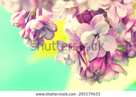 branch of tender lilac flowers - stock photo